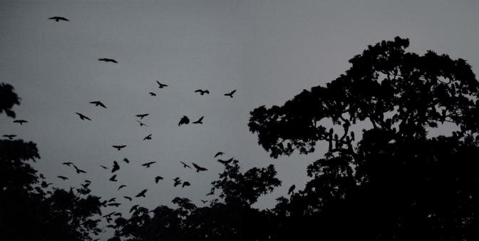 Dragana Jurisic: A Bird In The Head